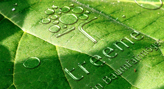 Treeme - Mein Baumfairmögen: Ein Produkt der Green Wood International AG