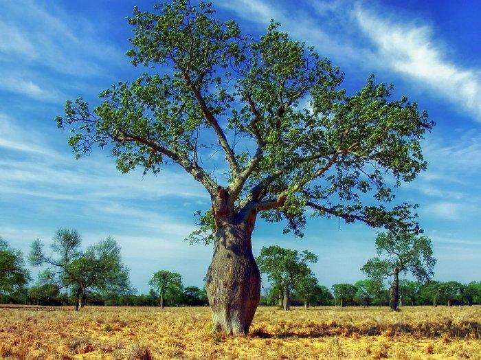 Ökoregion - Proindex Capital bericht über das Upper-Paraná-Gebiet