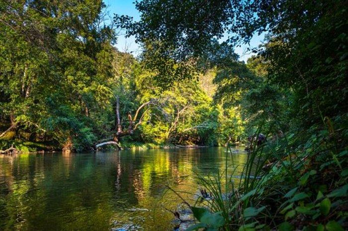 Proindex Capital AG - Atlantischer Wald San Rafael-Reservat