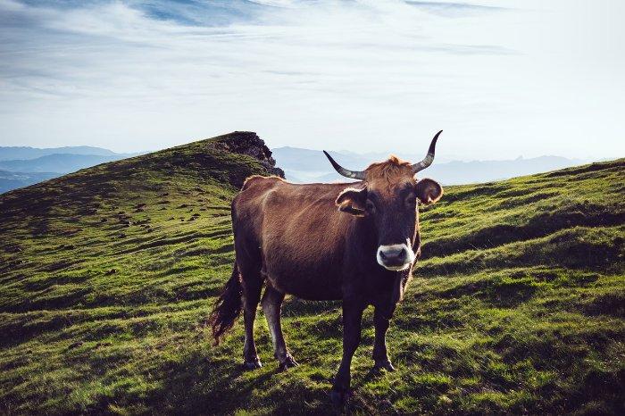 Andreas Jelinek - Paraguay Landwirtschaft und Viehzucht