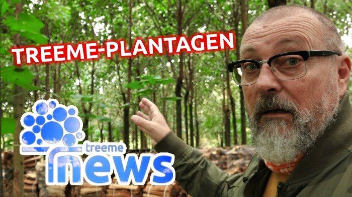 treeme Plantagen - Royal-Treeme - Green Wood International