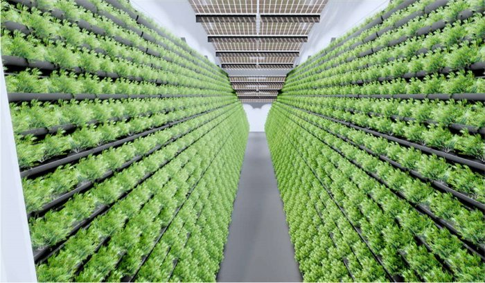 Indoor-Vertical-Farming - MABEWO informiert über Indoor-Farming-Systeme
